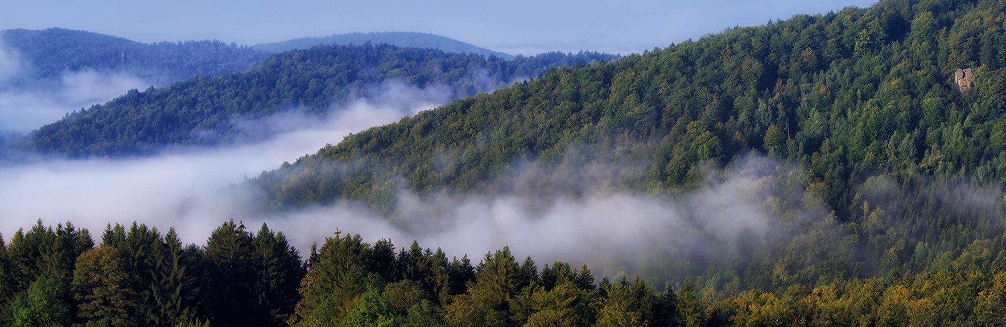 Bayerischer Wald im Nebel - Geistlicher Stein und Bach Sagwasser