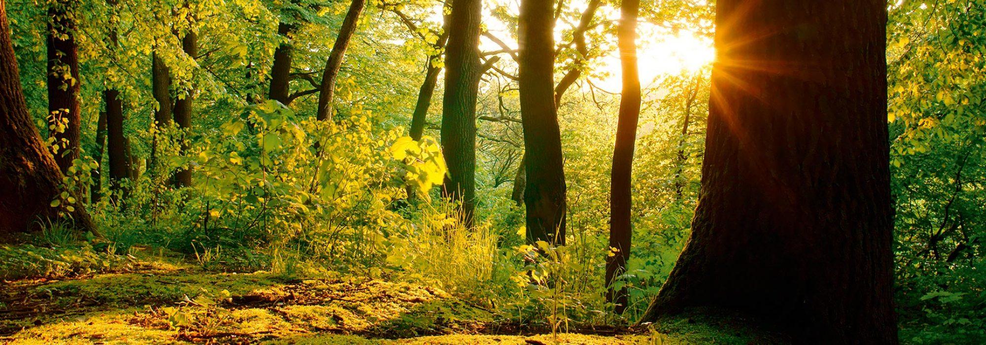 Hintergrund Zitat Wald